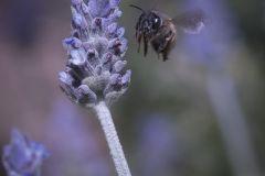 Insectos y Plantas